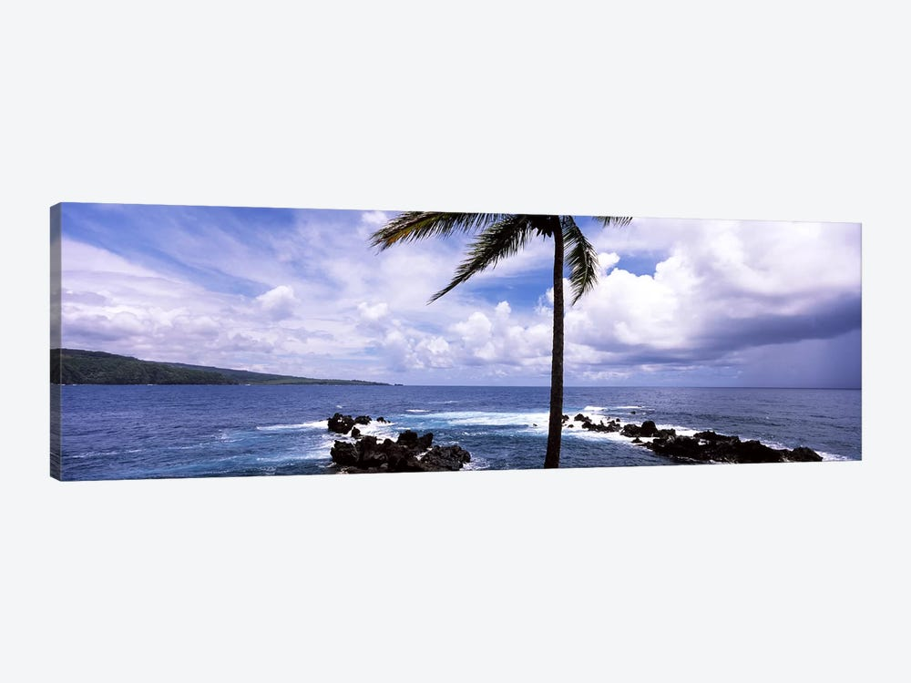 Palm tree on the coast, Honolulu Nui Bay, Nahiku, Maui, Hawaii, USA by Panoramic Images 1-piece Art Print