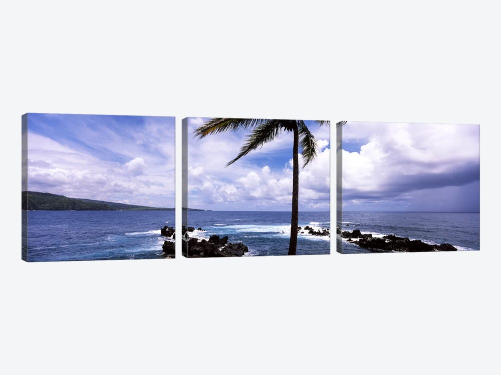 Palm tree on the coast, Honolulu Nui Bay, Nahiku, Maui, Hawaii, USA by Panoramic Images 3-piece Art Print