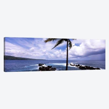 Palm tree on the coast, Honolulu Nui Bay, Nahiku, Maui, Hawaii, USA Canvas Print #PIM7104} by Panoramic Images Canvas Print