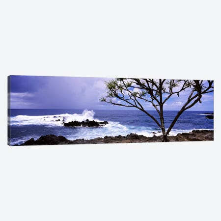 Tree on the coast, Honolulu Nui Bay, Nahiku, Maui, Hawaii, USA Canvas Print #PIM7105} by Panoramic Images Canvas Print