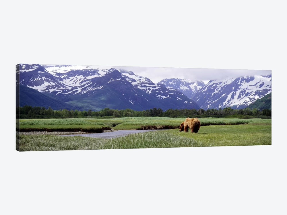 Grizzly bear (Ursus arctos horribilis) grazing in a field, Kukak Bay, Katmai National Park, Alaska, USA #2 by Panoramic Images 1-piece Canvas Art