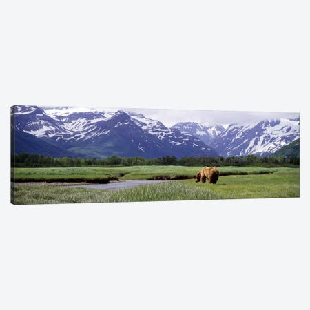 Grizzly bear (Ursus arctos horribilis) grazing in a field, Kukak Bay, Katmai National Park, Alaska, USA #2 Canvas Print #PIM7109} by Panoramic Images Canvas Wall Art