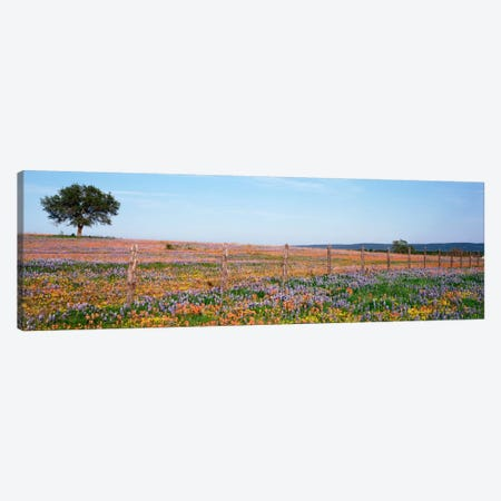 Field Of Wildflowers, Texas Hill Country, Texas, USA Canvas Print #PIM710} by Panoramic Images Canvas Art