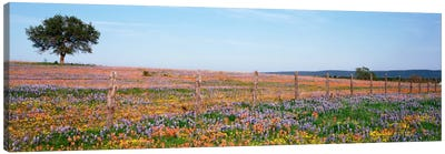 Field Of Wildflowers, Texas Hill Country, Texas, USA Canvas Print #PIM710