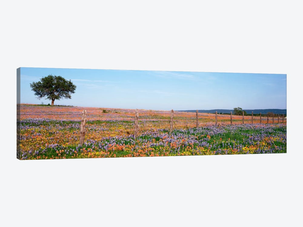 Field Of Wildflowers, Texas Hill Country, Texas, USA by Panoramic Images 1-piece Canvas Artwork