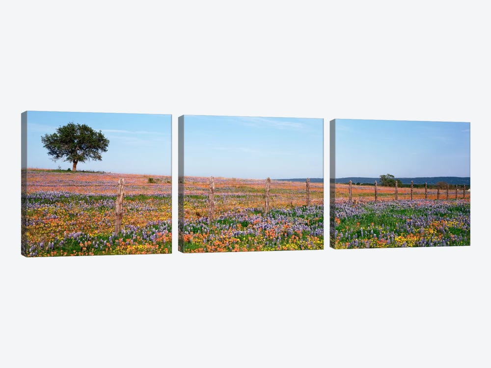 Field Of Wildflowers, Texas Hill Country, Texas, USA by Panoramic Images 3-piece Canvas Art
