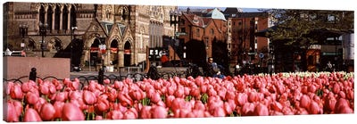 Tulips in a garden with Old South Church in the backgroundCopley Square, Boston, Suffolk County, Massachusetts, USA Canvas Art Print