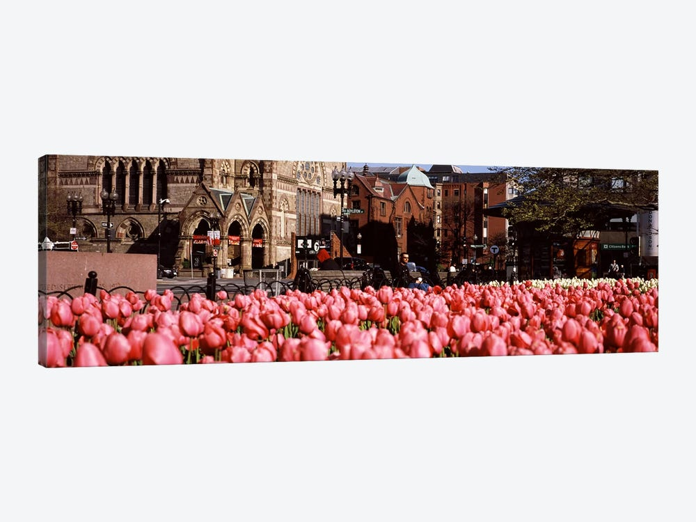Tulips in a garden with Old South Church in the backgroundCopley Square, Boston, Suffolk County, Massachusetts, USA by Panoramic Images 1-piece Canvas Artwork