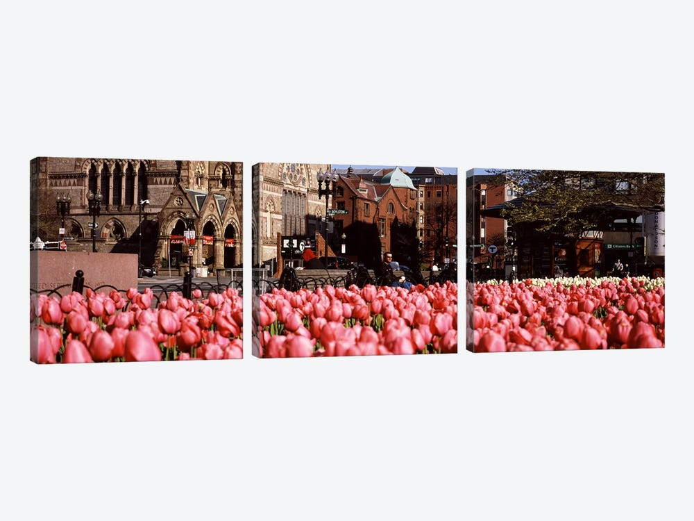 Tulips in a garden with Old South Church in the backgroundCopley Square, Boston, Suffolk County, Massachusetts, USA by Panoramic Images 3-piece Canvas Wall Art