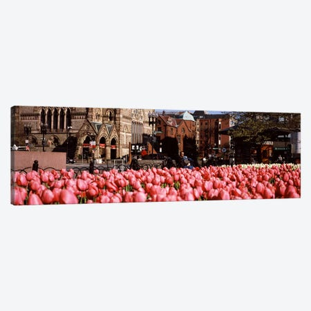 Tulips in a garden with Old South Church in the backgroundCopley Square, Boston, Suffolk County, Massachusetts, USA Canvas Print #PIM7129} by Panoramic Images Canvas Wall Art