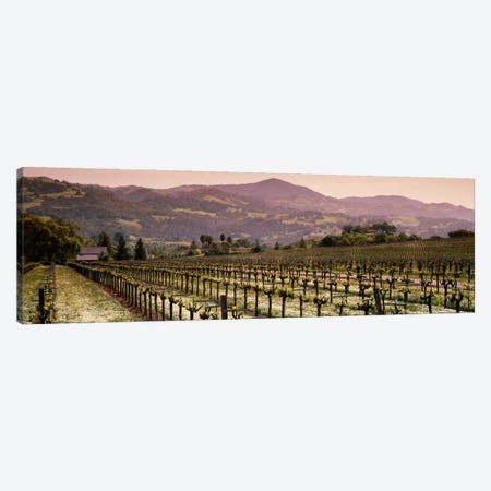 Vineyard Landscape, Asti, Alexander Valley APA, Sonoma County, California, USA Canvas Print #PIM714} by Panoramic Images Canvas Print