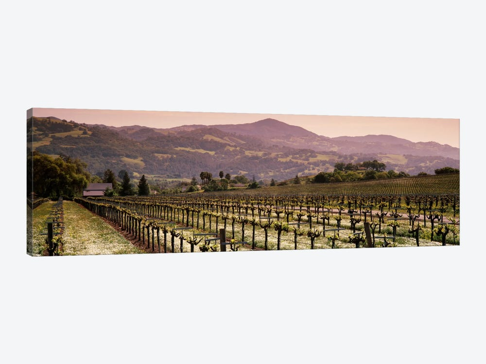Vineyard Landscape, Asti, Alexander Valley APA, Sonoma County, California, USA by Panoramic Images 1-piece Canvas Art