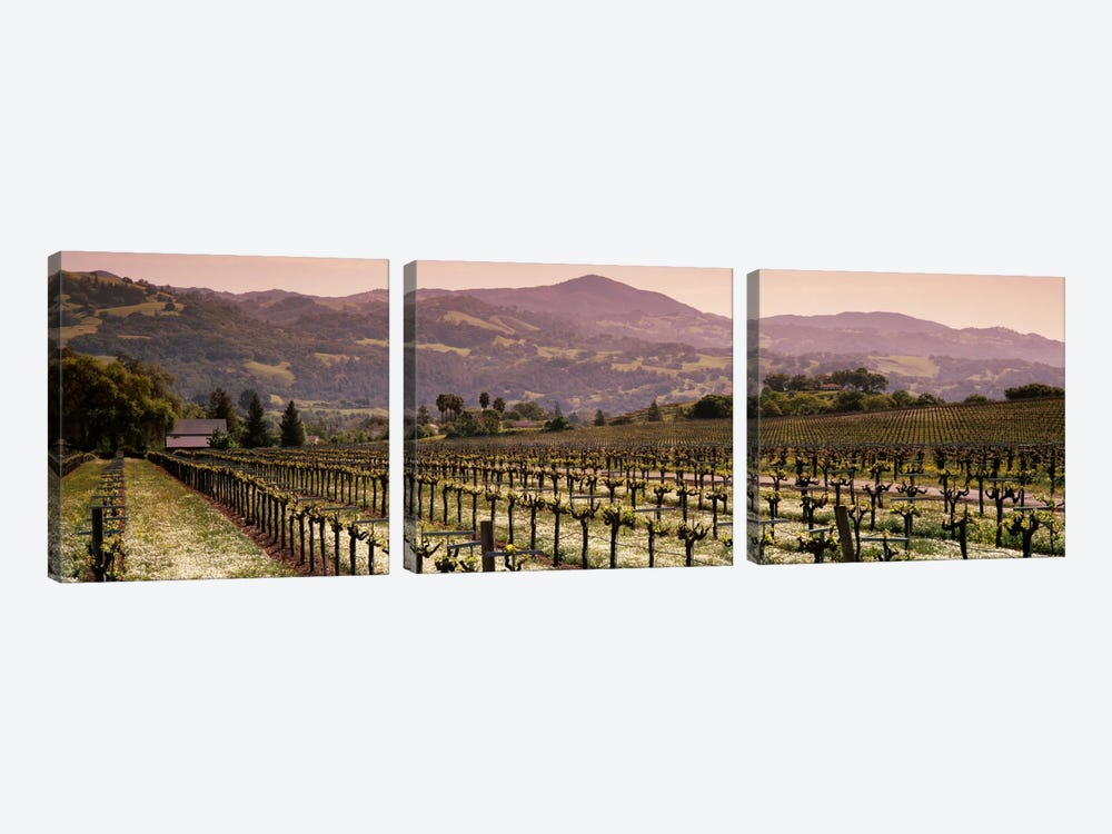 Vineyard Landscape, Asti, Alexander Valley APA, Sonoma County, California, USA by Panoramic Images 3-piece Canvas Artwork