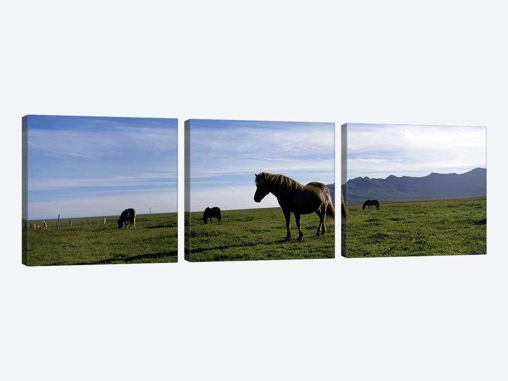 Icelandic horses in a field, Svinafell, Iceland 3-piece Canvas Art