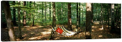 Hammock in a forest, Baden-Wurttemberg, Germany Canvas Art Print