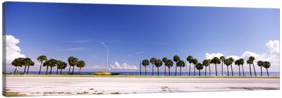 Palm trees at the roadside, Interstate 275, Tampa Bay, Gulf of Mexico, Florida, USA Canvas Art Print