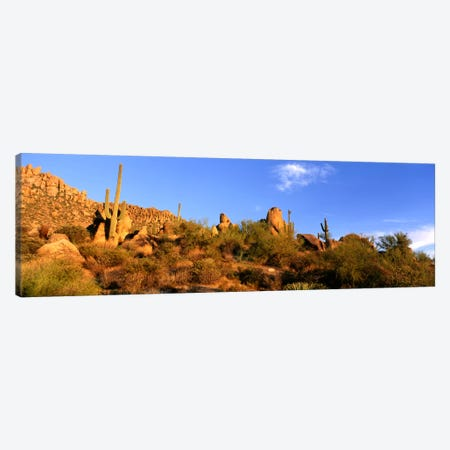 Desert Landscape, Sonoran Desert, Arizona, United States Canvas Print #PIM716} by Panoramic Images Canvas Art Print