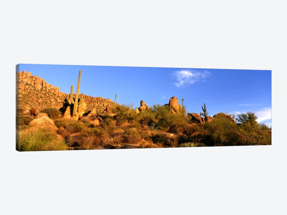 Desert Landscape, Sonoran Desert, Arizona, United States by Panoramic Images 1-piece Canvas Artwork
