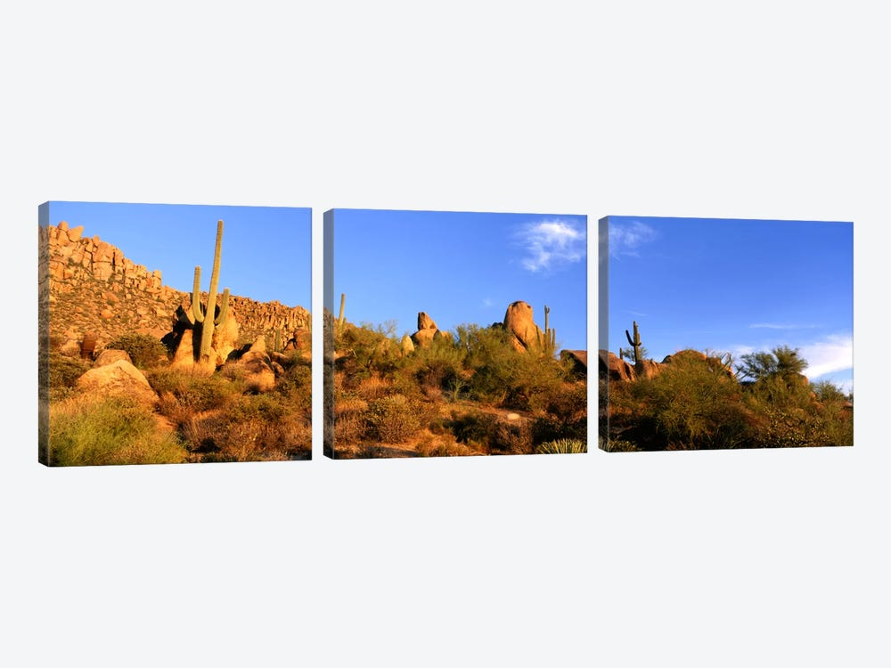 Desert Landscape, Sonoran Desert, Arizona, United States by Panoramic Images 3-piece Canvas Wall Art