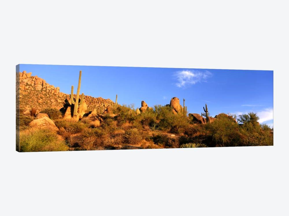 Desert Landscape, Sonoran Desert, Arizona, United States by Panoramic Images 1-piece Canvas Artwork