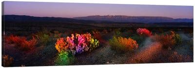Colorful Desert Landscape, Big Bend National Park, Texas, USA Canvas Print #PIM718