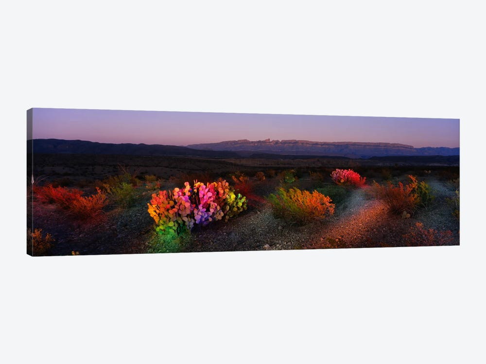 Colorful Desert Landscape, Big Bend National Park, Texas, USA by Panoramic Images 1-piece Canvas Art