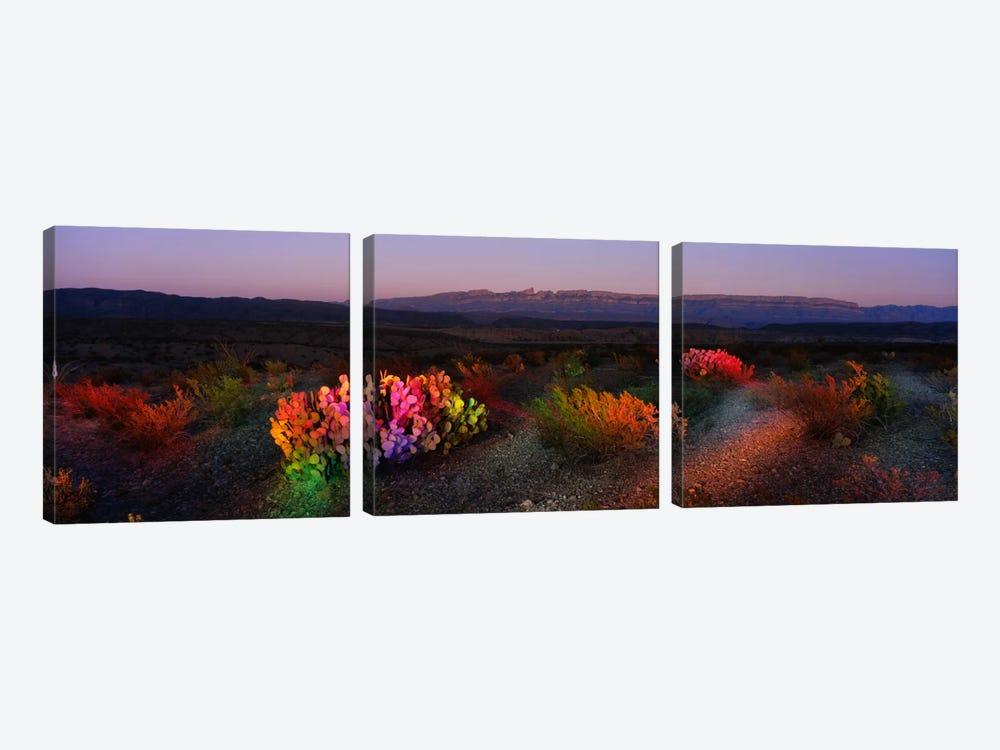 Colorful Desert Landscape, Big Bend National Park, Texas, USA by Panoramic Images 3-piece Canvas Wall Art