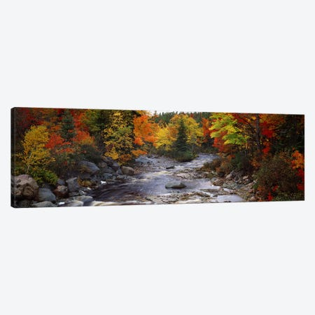 Stream with trees in a forest in autumn, Nova Scotia, Canada Canvas Print #PIM7204} by Panoramic Images Canvas Art