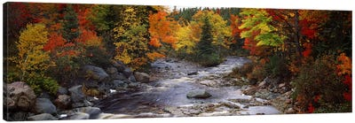 Stream with trees in a forest in autumn, Nova Scotia, Canada Canvas Art Print