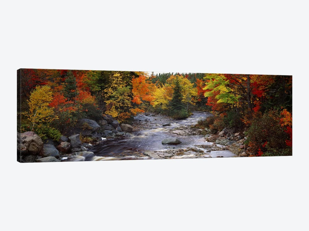 Stream with trees in a forest in autumn, Nova Scotia, Canada by Panoramic Images 1-piece Art Print