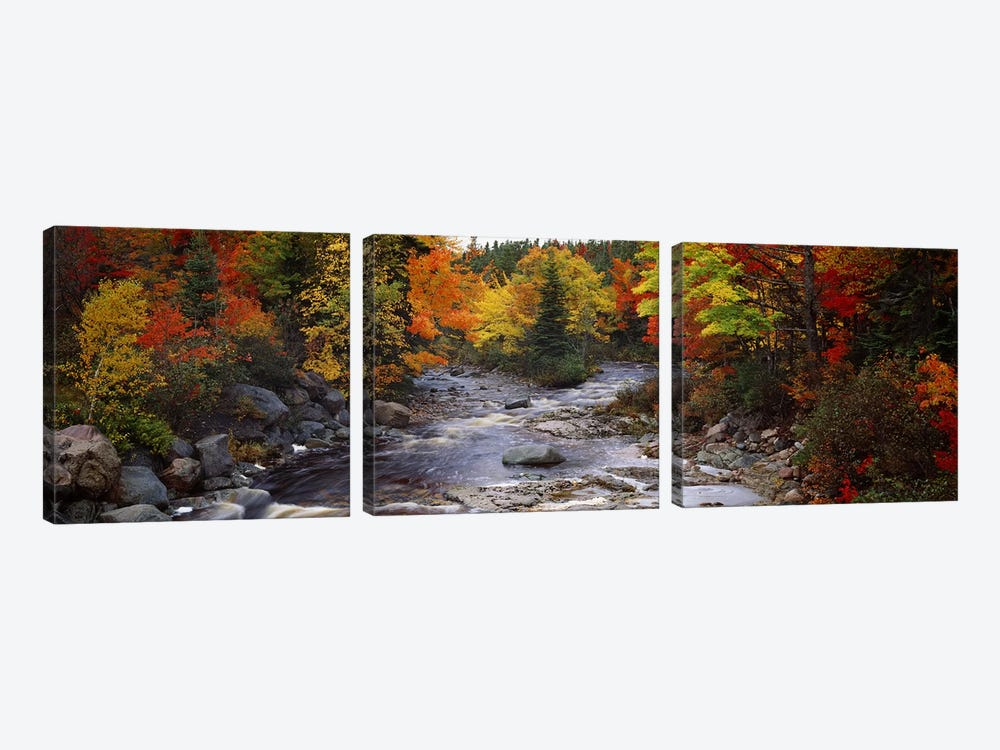 Stream with trees in a forest in autumn, Nova Scotia, Canada by Panoramic Images 3-piece Canvas Art Print