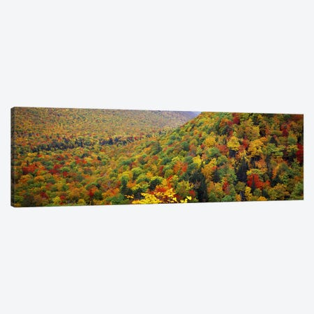 Mountain forest in autumnNova Scotia, Canada Canvas Print #PIM7214} by Panoramic Images Canvas Print