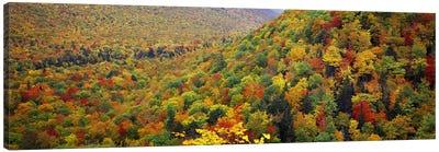 Mountain forest in autumnNova Scotia, Canada Canvas Print #PIM7214