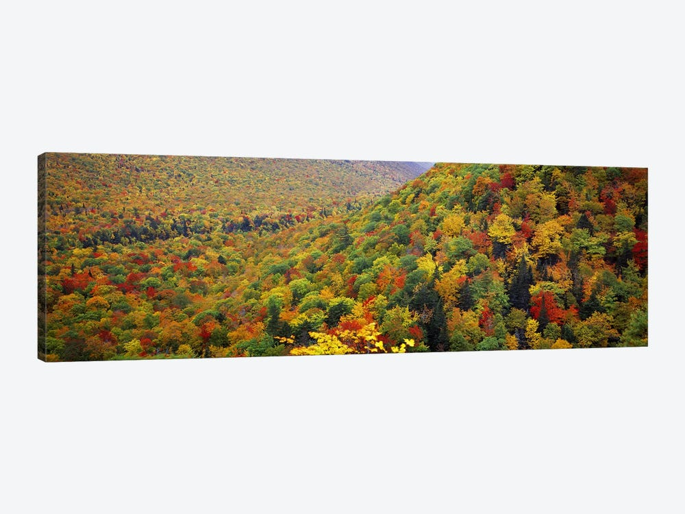 Mountain forest in autumnNova Scotia, Canada by Panoramic Images 1-piece Canvas Art