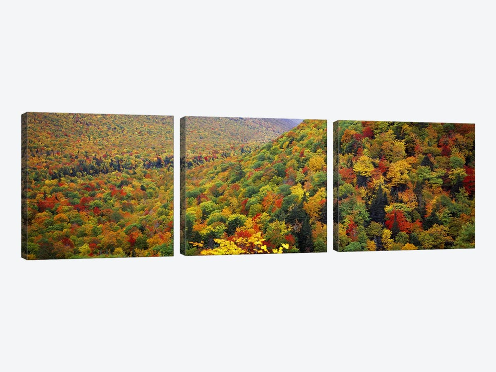 Mountain forest in autumnNova Scotia, Canada by Panoramic Images 3-piece Canvas Artwork