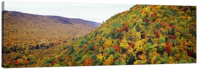Mountain forest in autumnNova Scotia, Canada Canvas Print #PIM7215