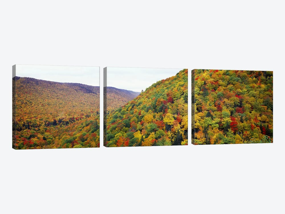 Mountain forest in autumnNova Scotia, Canada 3-piece Canvas Art Print