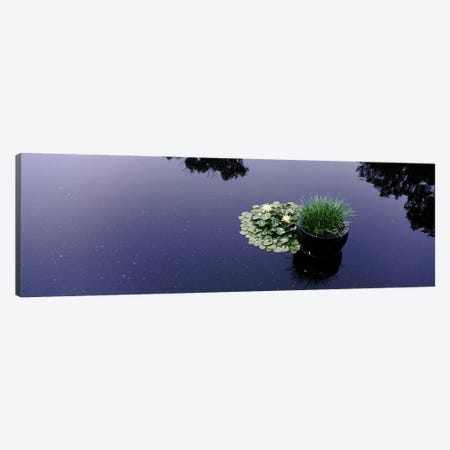Water lilies with a potted plant in a pondOlbrich Botanical Gardens, Madison, Wisconsin, USA Canvas Print #PIM7239} by Panoramic Images Canvas Art