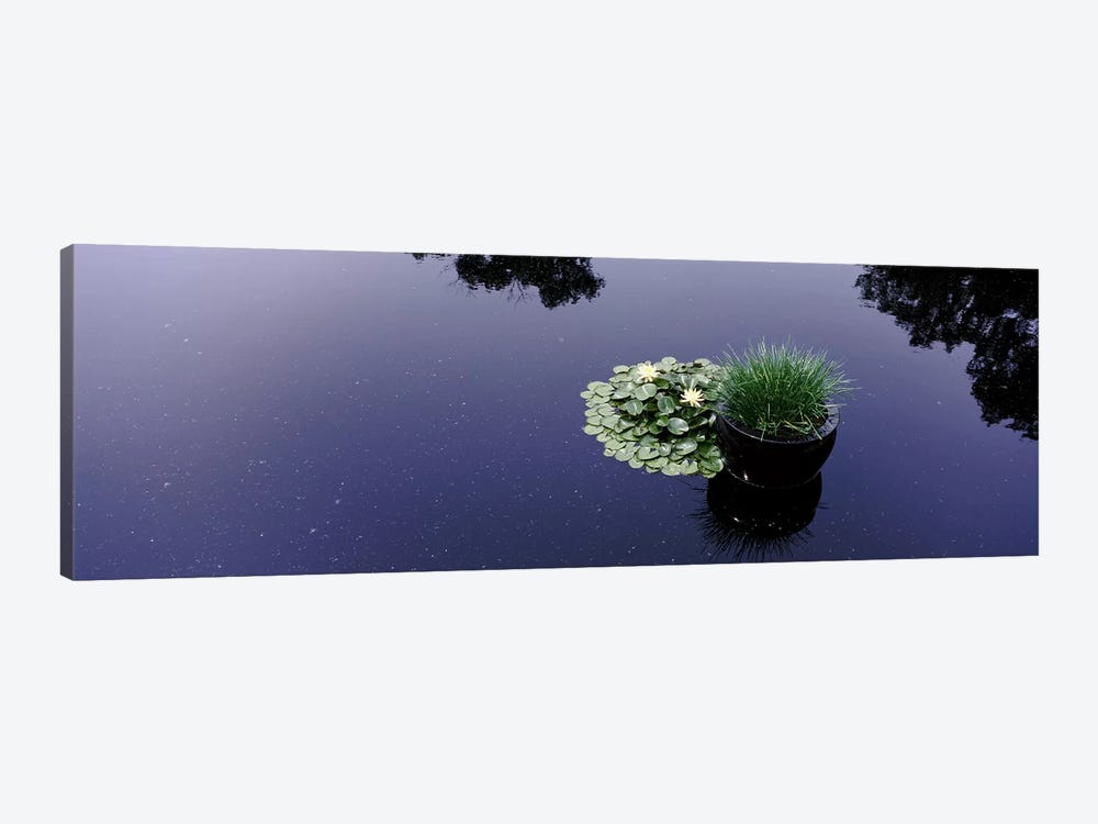 Water lilies with a potted plant in a pondOlbrich Botanical Gardens, Madison, Wisconsin, USA 1-piece Art Print