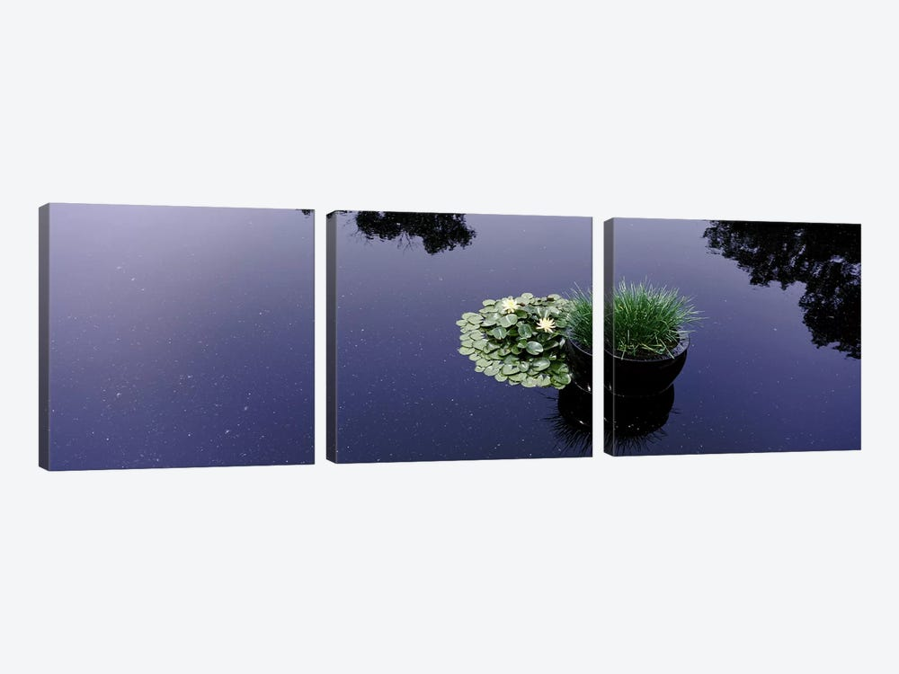 Water lilies with a potted plant in a pondOlbrich Botanical Gardens, Madison, Wisconsin, USA by Panoramic Images 3-piece Canvas Art Print