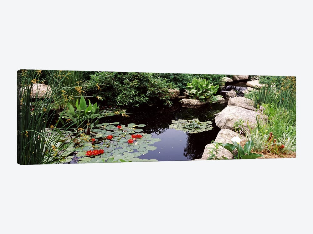 Water lilies in a pondSunken Garden, Olbrich Botanical Gardens, Madison, Wisconsin, USA by Panoramic Images 1-piece Art Print