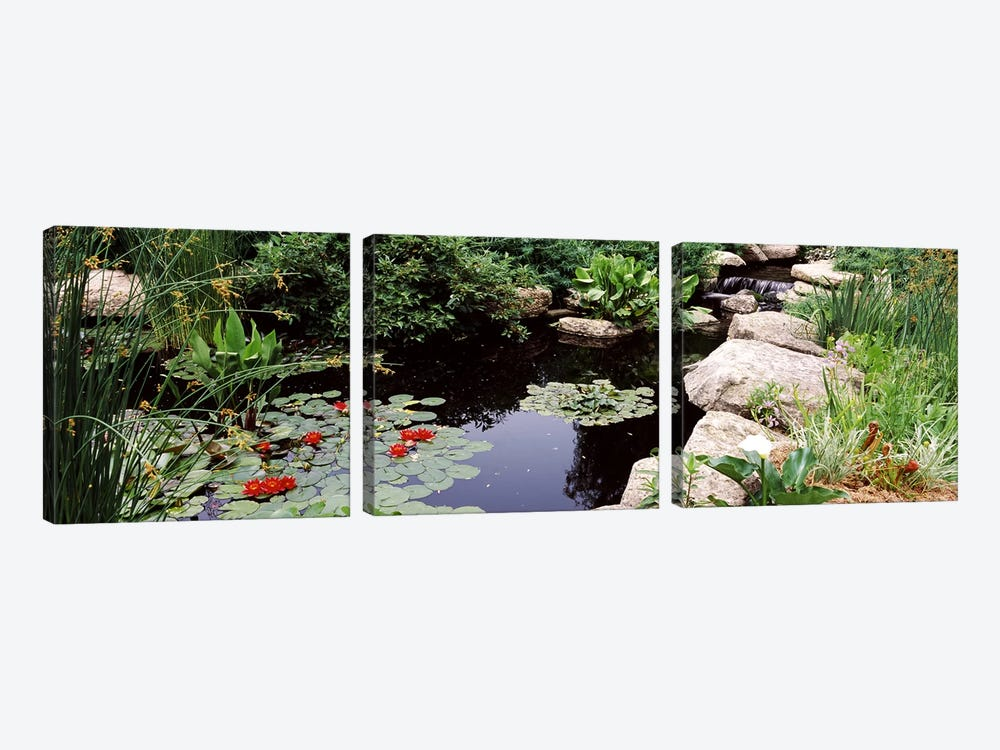 Water lilies in a pondSunken Garden, Olbrich Botanical Gardens, Madison, Wisconsin, USA by Panoramic Images 3-piece Canvas Print