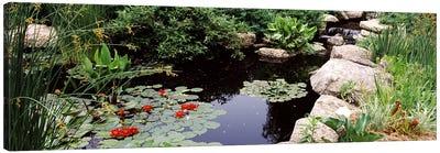 Water lilies in a pondSunken Garden, Olbrich Botanical Gardens, Madison, Wisconsin, USA Canvas Art Print