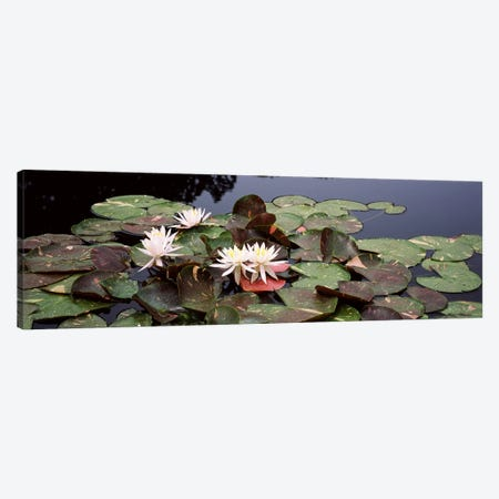 Water lilies in a pond, Sunken Garden, Olbrich Botanical Gardens, Madison, Wisconsin, USA Canvas Print #PIM7241} by Panoramic Images Canvas Art Print