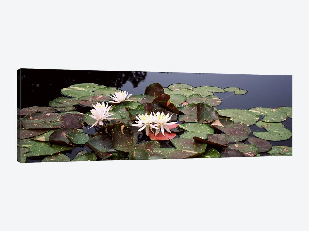 Water lilies in a pond, Sunken Garden, Olbrich Botanical Gardens, Madison, Wisconsin, USA by Panoramic Images 1-piece Canvas Artwork