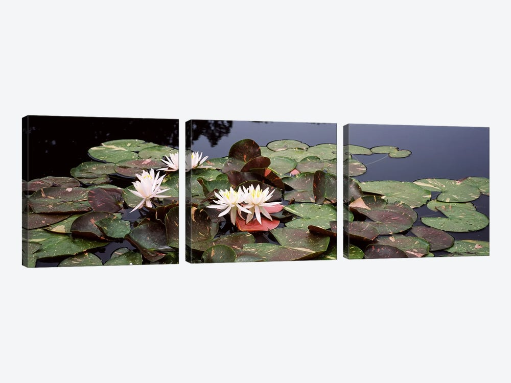 Water lilies in a pond, Sunken Garden, Olbrich Botanical Gardens, Madison, Wisconsin, USA by Panoramic Images 3-piece Canvas Artwork