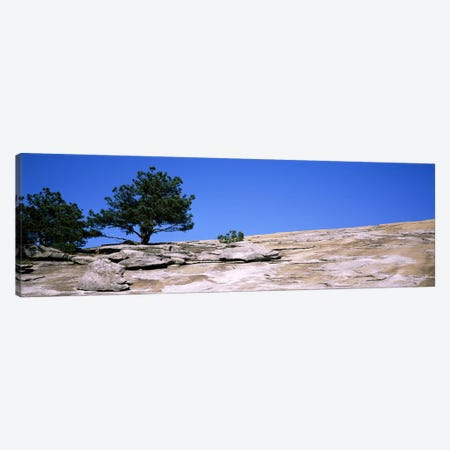 Trees on a mountain, Stone Mountain, Atlanta, Fulton County, Georgia, USA #2 Canvas Print #PIM7258} by Panoramic Images Canvas Art