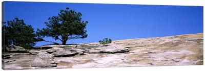 Trees on a mountain, Stone Mountain, Atlanta, Fulton County, Georgia, USA #2 Canvas Art Print