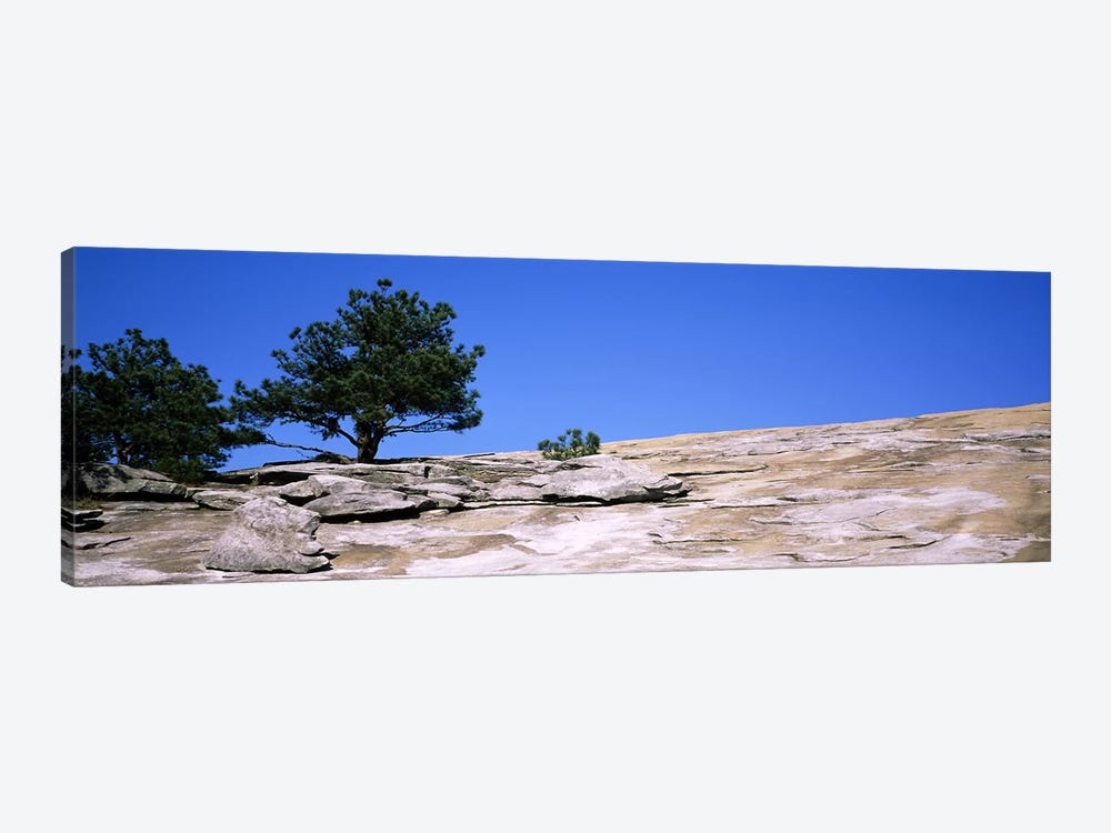 Trees on a mountain, Stone Mountain, Atlanta, Fulton County, Georgia, USA #2 by Panoramic Images 1-piece Canvas Art