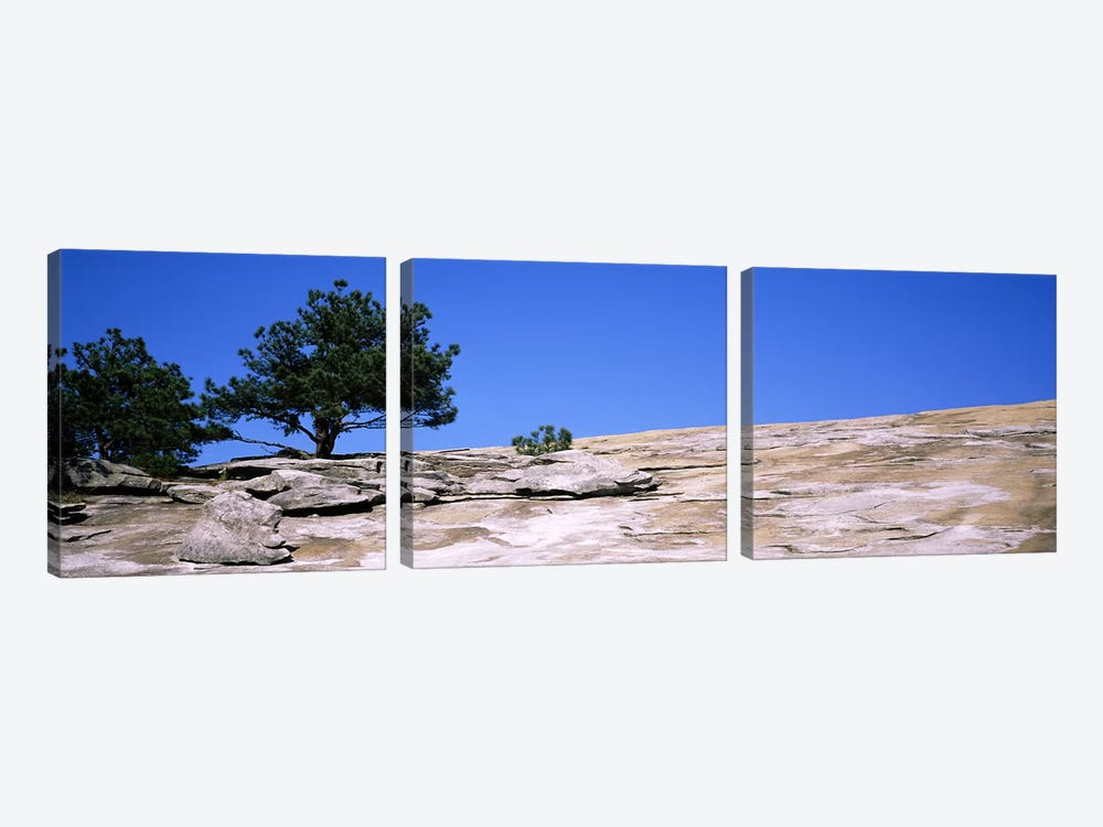 Trees on a mountain, Stone Mountain, Atlanta, Fulton County, Georgia, USA #2 by Panoramic Images 3-piece Canvas Wall Art